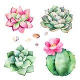 与多汁植物植物,小卵石石头,仙人掌的水彩汇集 向量例证