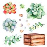 与多汁植物植物,小卵石石头, branche,木罐的水彩汇集 向量例证