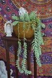 与多汁植物的神秘的装饰 库存图片