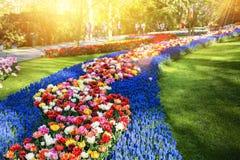 与多色花的春天风景 背景蓝色云彩调遣草绿色本质天空空白小束 免版税库存图片