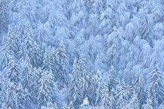 与多雪的云杉和山毛榉的冬天场面 免版税库存照片