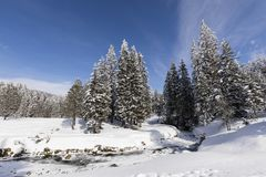 与多雪的冷杉木的冻小河在一个美好的冬日 库存图片