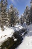 与多雪的冷杉木的冻小河在一个美好的冬日 图库摄影