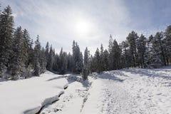 与多雪的冷杉木的冻小河在一个美好的冬日 免版税库存照片
