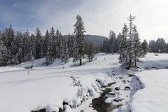 与多雪的冷杉木的冻小河在一个美好的冬日 免版税图库摄影