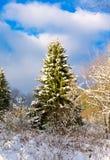 与多雪的冷杉木的圣诞节背景 免版税库存图片