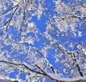与多雪的分支的冬天场面 免版税库存图片
