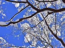 与多雪的分支的冬天场面 库存图片