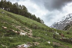 与多雪的山峰的风景 免版税库存照片