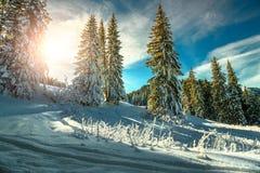 与多雪的树和森林,特兰西瓦尼亚,罗马尼亚的庄严冬天风景 库存照片