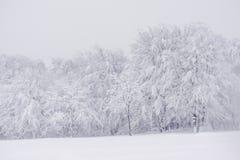 与多雪的树的一个山风景在早期的冬天 免版税图库摄影