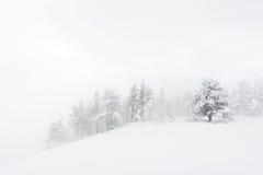 与多雪的树的冬天风景在飞雪 图库摄影