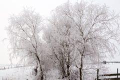 与多雪的树的冷的冬日在小山 免版税图库摄影