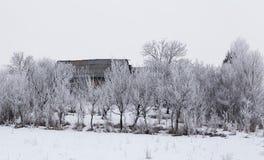 与多雪的树的冷的冬日在小山 免版税库存图片