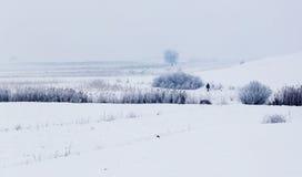与多雪的树的冷的冬日在小山 库存照片