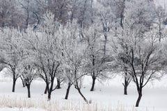 与多雪的树的冷的冬日在小山 免版税库存照片