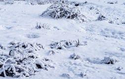 与多雪的森林的乡下场面 免版税库存照片
