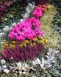 与多年生植物的开花的花床 免版税库存照片