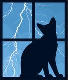 与夜空和猫的窗口 免版税库存照片