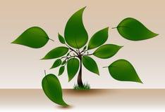 与大叶子的绿色树 向量例证