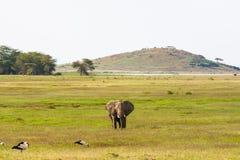 与大大象的风景 Amboseli,肯尼亚小山  库存照片