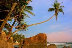 与大岩石的倾斜的棕榈树, Unawatuna海滩,斯里兰卡 库存图片