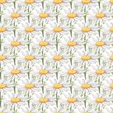 与大春黄菊花的无缝的样式 免版税库存照片