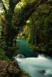 与大树的小河风景对此 库存图片