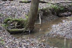 与大树,灰洞,俄亥俄的小河 库存照片