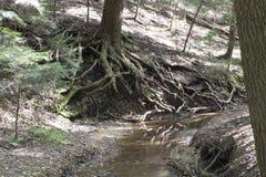 与大树,灰洞,俄亥俄的小河 免版税库存照片