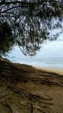 与大根的树在海滩 库存图片