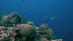 与大海底扇的珊瑚礁和丰足钓鱼4k 股票录像
