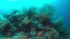 与大海底扇的珊瑚礁 4K 股票视频