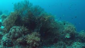 与大海底扇的珊瑚礁 4K 影视素材