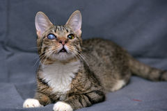 与大瀑布的虎斑猫在眼睛 免版税图库摄影