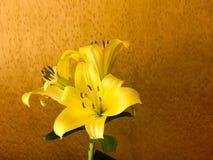 与大瓣和芽,在棕色有斑点的背景,动物区系,植物的一个词根的一朵美丽的黄色百合花 免版税库存照片