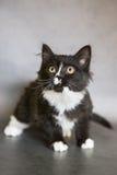 与大眼睛的小猫 免版税库存图片