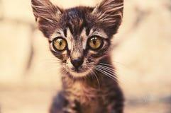 与大眼睛的小的滑稽的小猫 图库摄影
