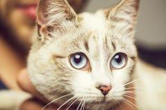 与大眼睛的猫 库存照片