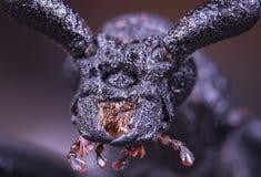 与大眼睛的蜘蛛 免版税库存图片