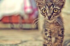 与大眼睛的逗人喜爱的小猫-储蓄图象 库存照片
