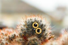与大眼睛的逗人喜爱的猫头鹰小鸡,被掀动他的头、仙人掌与眼睛和额嘴拼贴画 图库摄影