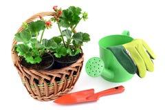 与大竺葵花的篮子 在旁边一个小庭院铁锹和雀鳝 免版税图库摄影