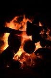 与大结构树的篝火 免版税库存图片