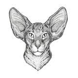 与大耳朵手拉的例证的东方猫纹身花刺的,象征,徽章,商标,补丁 免版税库存图片
