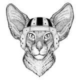 与大耳朵野生动物佩带的橄榄球盔甲体育例证的东方猫 免版税库存照片