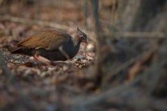 与大脚的奇怪的鸟在komodo海岛自然栖所  免版税库存图片