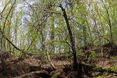 与大脚的树 图库摄影