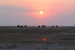 与大象的日落-徒步旅行队肯尼亚 免版税库存照片