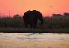 与大象的日落 图库摄影